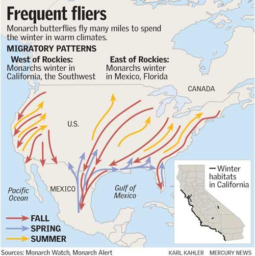 Monarch Migration patterns